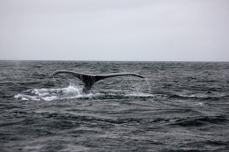 Mott electric whale