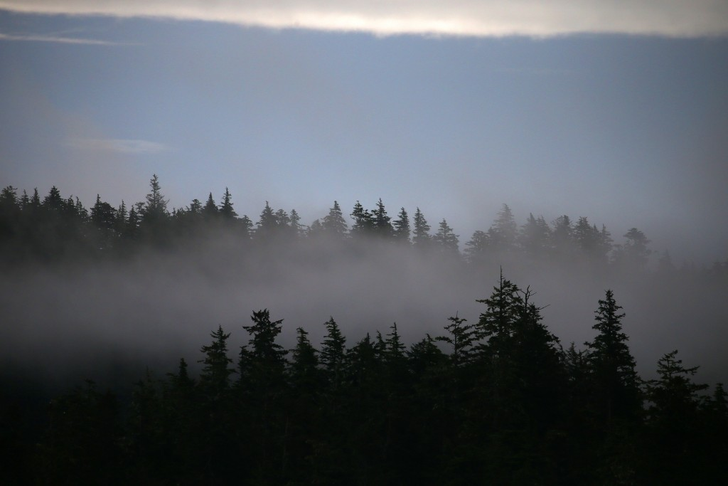 * Morning fog settling in on the pines.