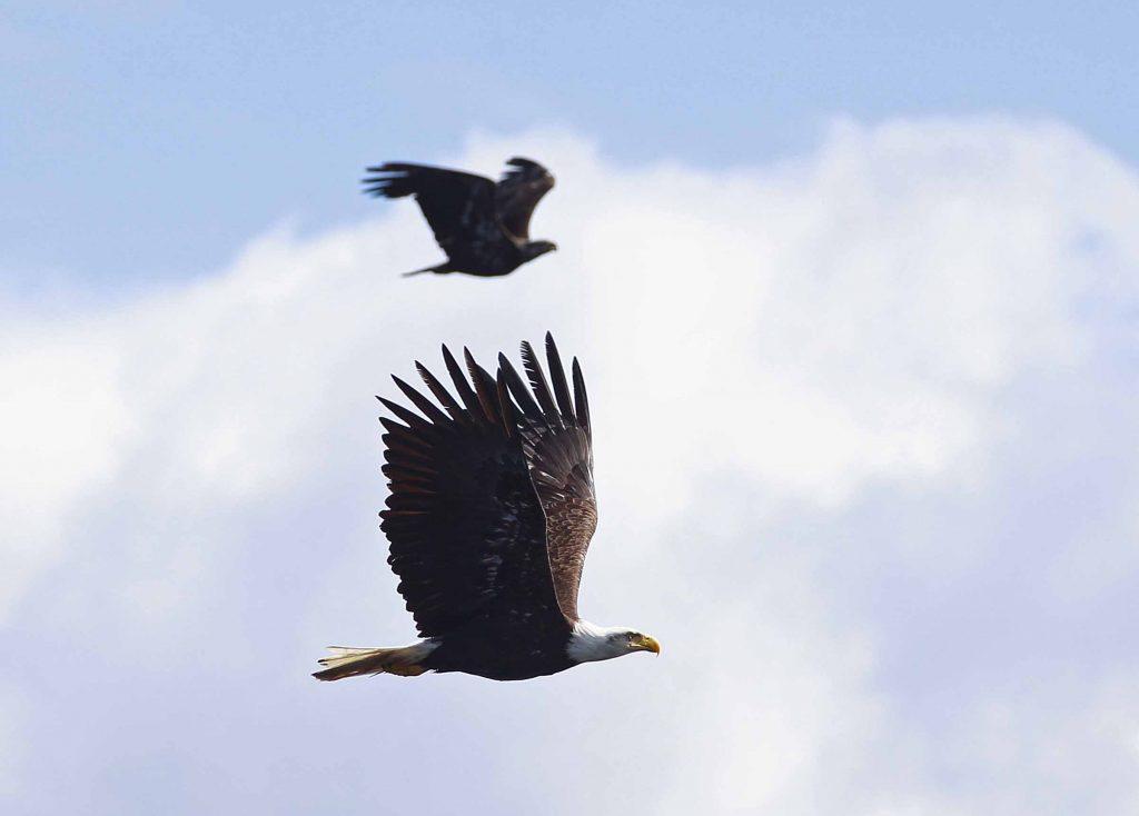 <em>* Eagles soaring overhead. </em>