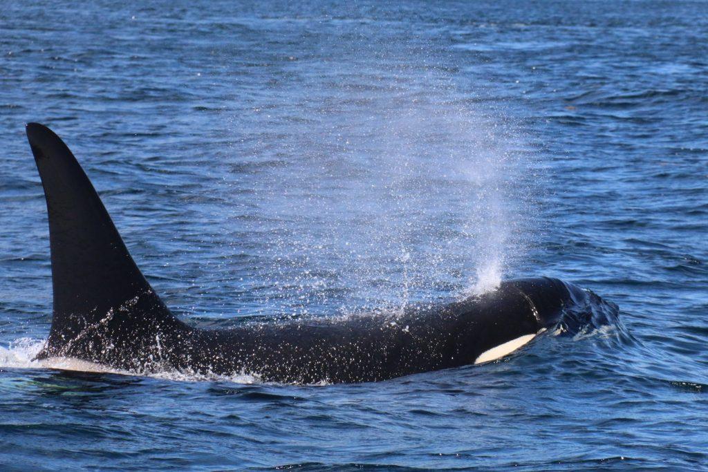 <em>* Orca passing through. </em>