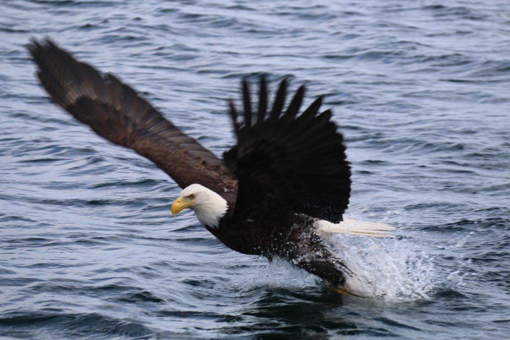 <em>* Eagles getting in on the action. </em>