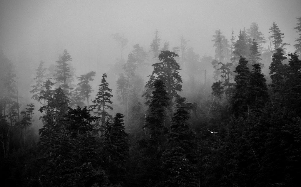 <em>* Mystical Haida Gwaii. </em>