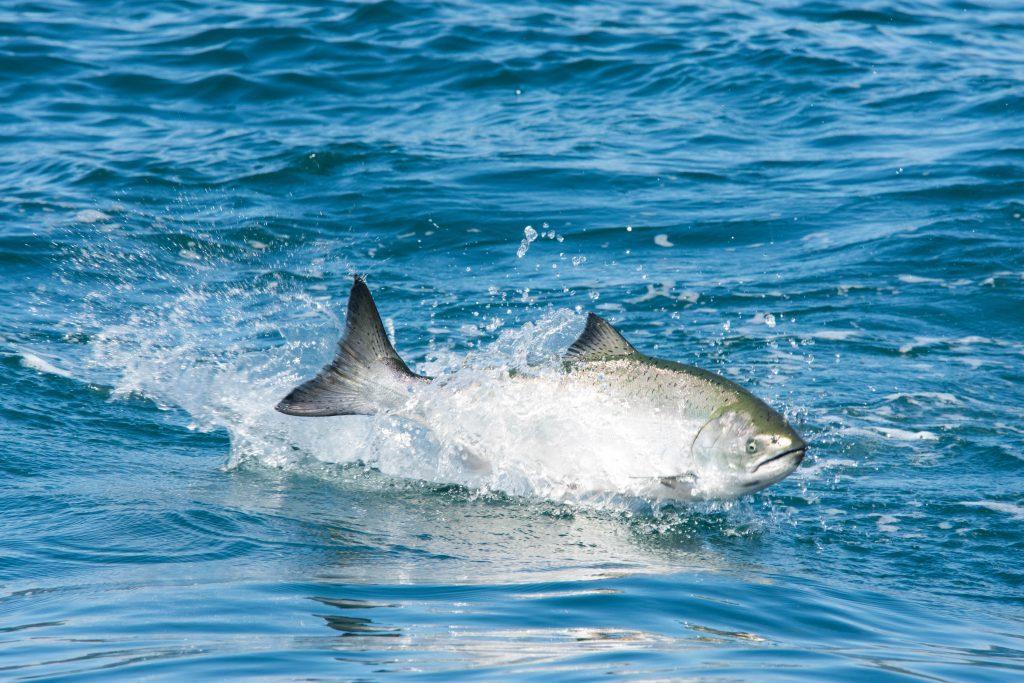 <em>* Fish on! </em>