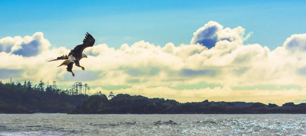 * Beautiful Eagle in flight.