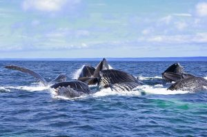 * Humpback whales playing in the sun.